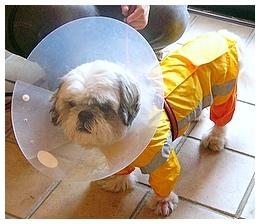 宇宙服を着た犬みたい